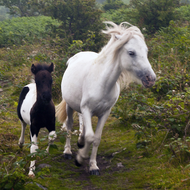 """""""Mother and Foal"""" stock image"""