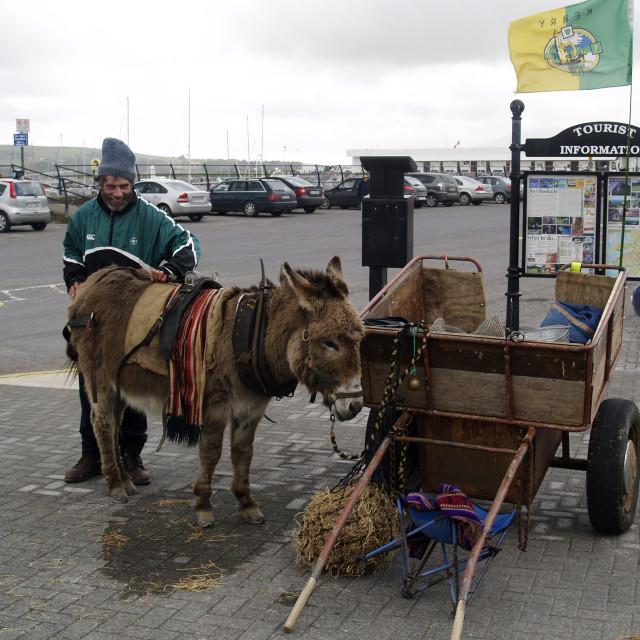 """""""Dingle Donkey"""" stock image"""