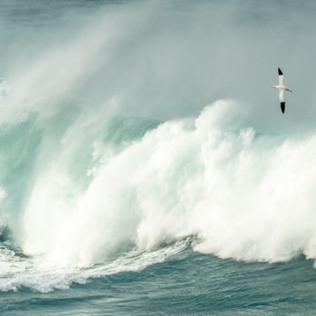 """Big Wave 1."" stock image"