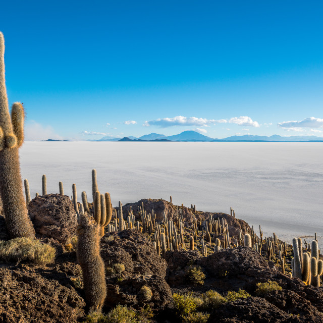 """Cactus Island"" stock image"