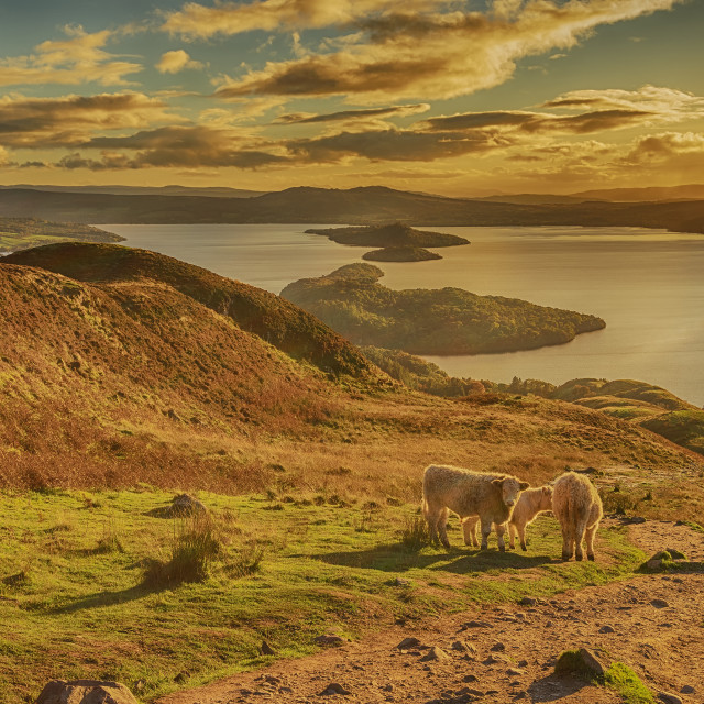 """""""An Autumn Evening on Conic Hill"""" stock image"""