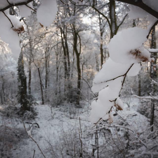 """""""British Winter"""" stock image"""