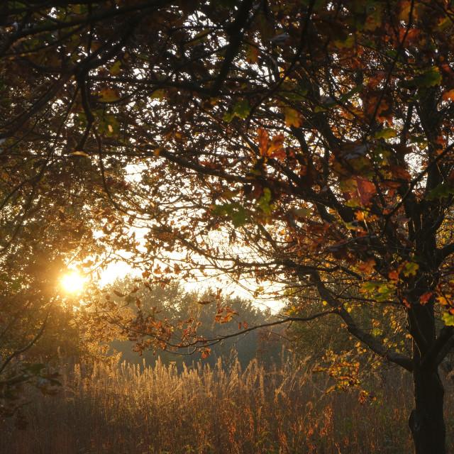 """""""Autumn Light"""" stock image"""