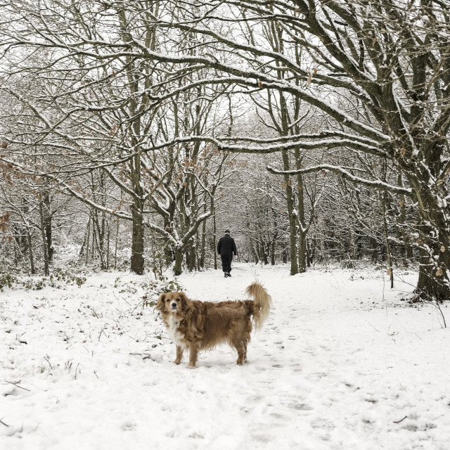 """""""Snowy walk in the woods"""" stock image"""