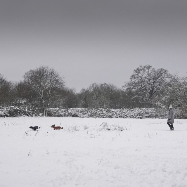 """Snow Day"" stock image"