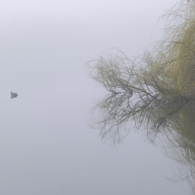 """Fog over the lake"" stock image"