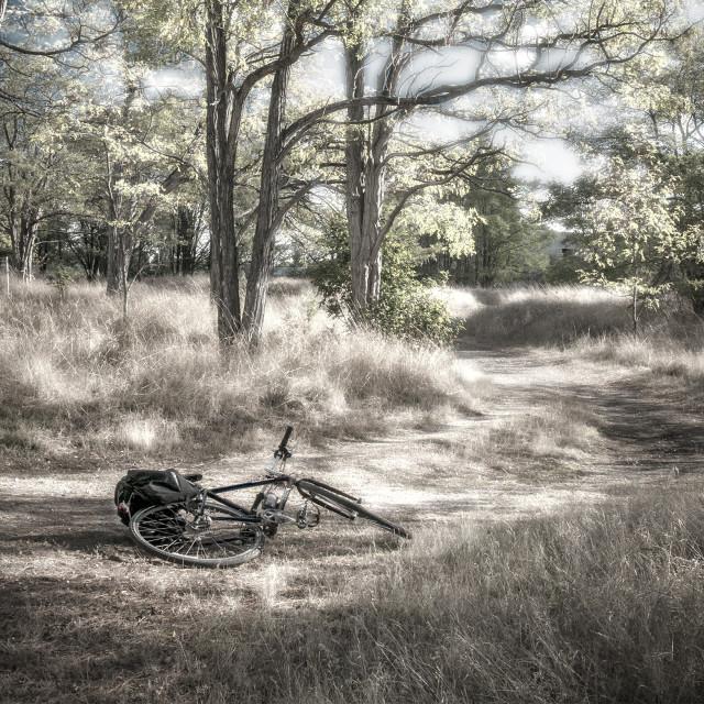 """""""Bike in Grassy Oak Meadow"""" stock image"""