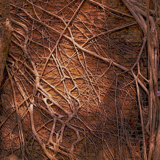 """""""Web of Roots, Ross Island"""" stock image"""