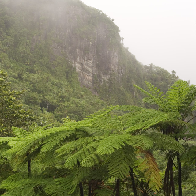 """""""Indian Face Peak and ferns, El Yunque (Caribbean National Forest), Puerto Rico"""" stock image"""