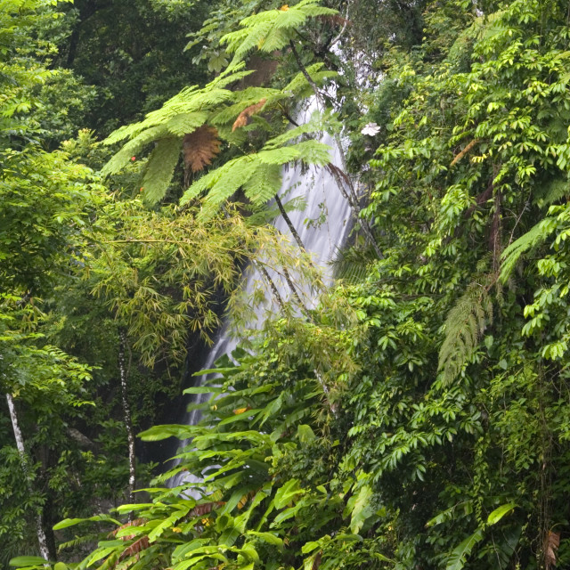 """""""La Coca Waterfalls and ferns, El Yunque (Caribbean National Forest), Puerto Rico"""" stock image"""