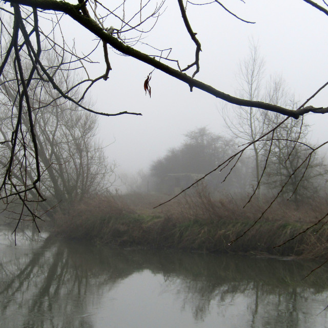 """Trees reflections on Thames, Oxfordshire in fog"" stock image"