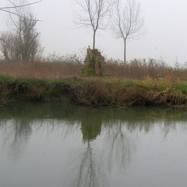 """Tree reflection on Thames, Oxfordshire in fog"" stock image"