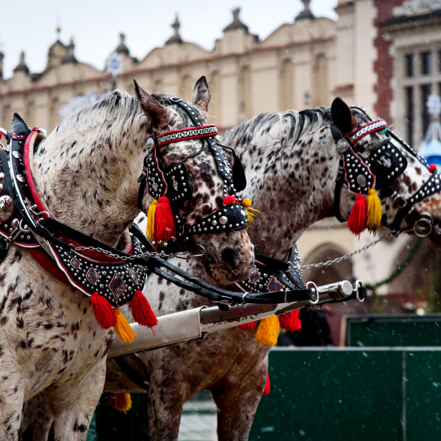 """""""European style carriage horses on the square"""" stock image"""
