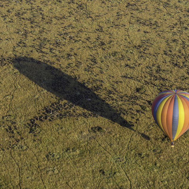 """Hot air balloon flying over Great Migration of the Wildebeest in the Masai Mara, Kenya"" stock image"
