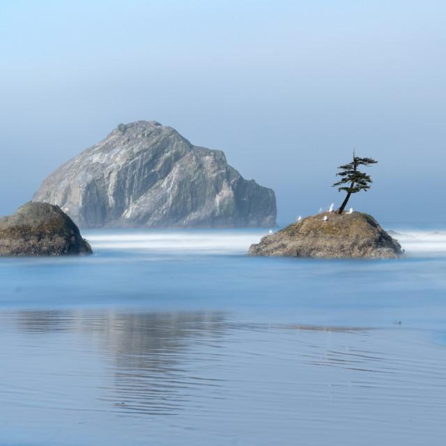 """Tree on a rock on in ocean on Oregon coast"" stock image"