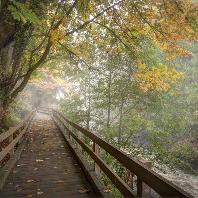 """Fall Boardwalk Along River"" stock image"
