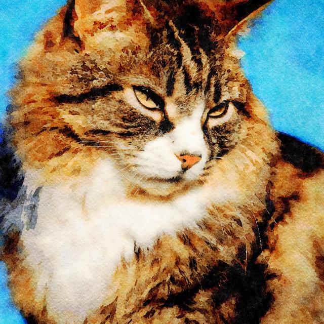 """Tabby cat portrait"" stock image"