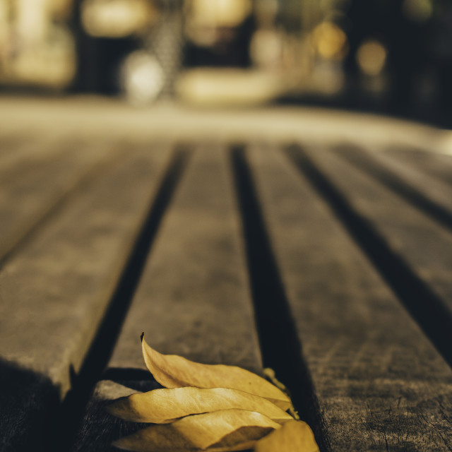 """""""Leaf in a bench"""" stock image"""