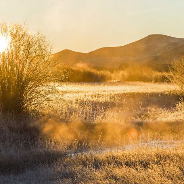 """""""Sunrise over field in Picabo, Idaho"""" stock image"""