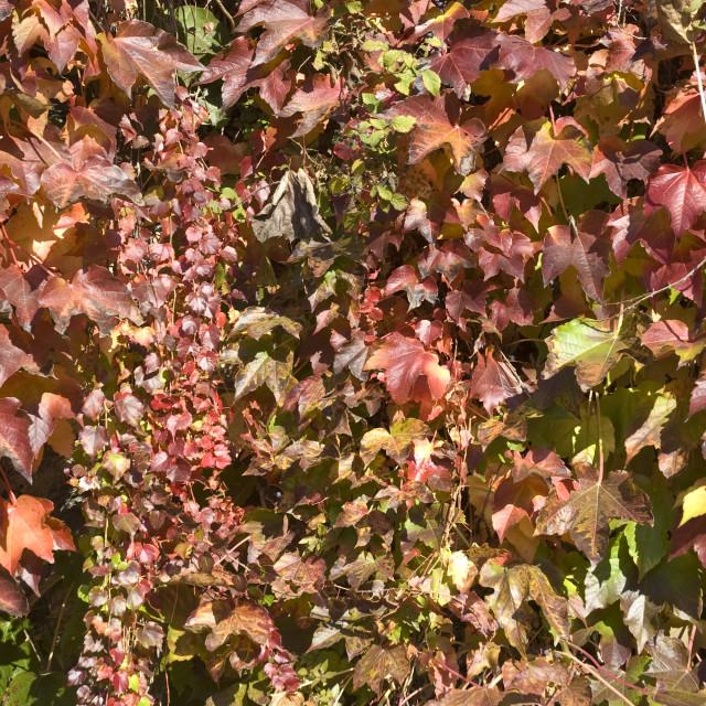 """foglie in autunno"" stock image"