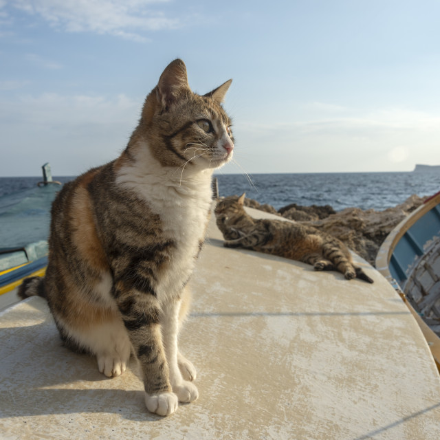 """""""cat sitting on the deck of a fishing boat in the harbour waiting for food from the fisherman"""" stock image"""