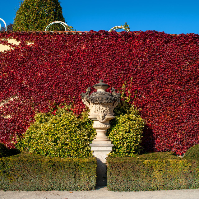 """""""Vrtba Garden Decorative vase against wall covered by red Virgini"""" stock image"""