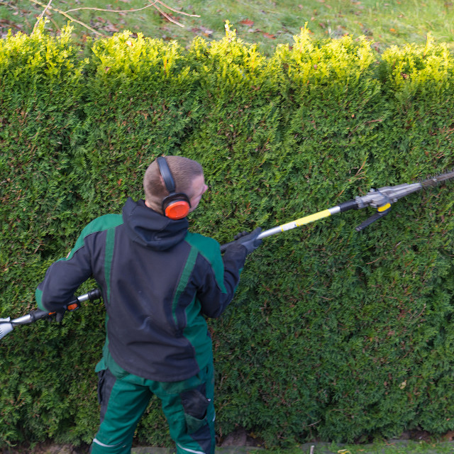 """Gardener cuts a hedge"" stock image"