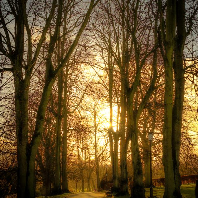 """Sunset behing Lime Trees"" stock image"