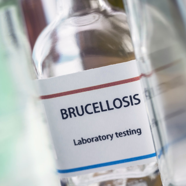 """""""Test brucellosis in laboratory, conceptual image, composition horizontal"""" stock image"""