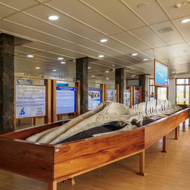 """""""Charles Darwin Research Station, interior, Puerto Ayora, Santa Cruz or..."""" stock image"""