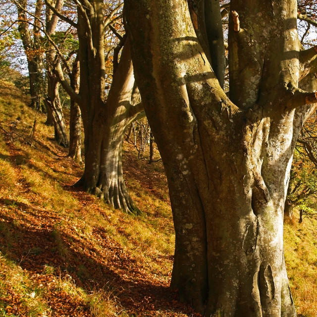 """""""Autumn at Up Cerne"""" stock image"""