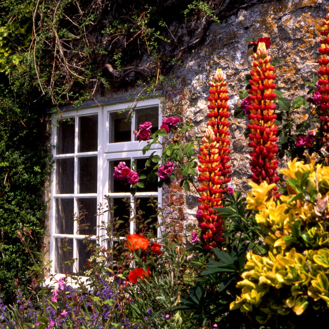 """Cottage Window and Flowers"" stock image"