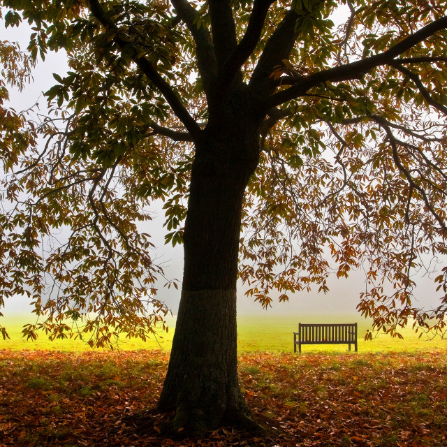 """""""Sweet Chestnut and Seat"""" stock image"""