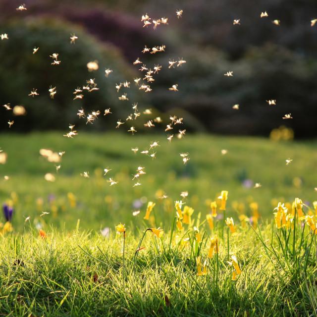 """Flower Fairies"" stock image"