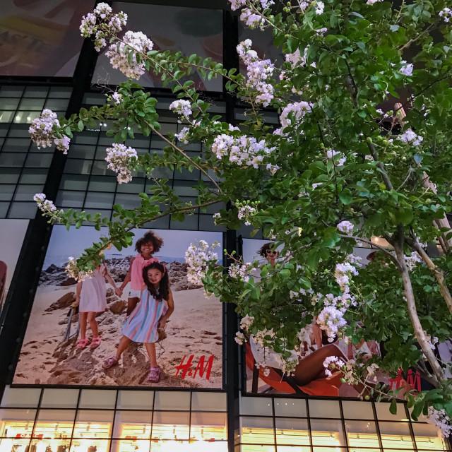 """""""Tokyo Sakura"""" stock image"""