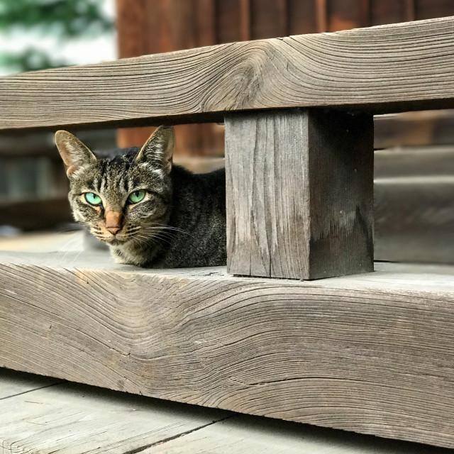"""Shrine Kitty"" stock image"