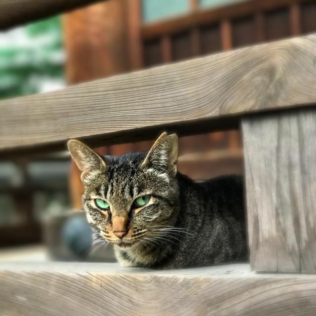 """Shrine Cat"" stock image"
