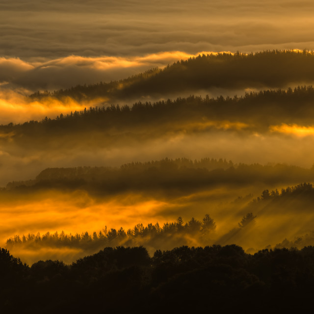 """""""Fog gilded by the sun's rays of dawn"""" stock image"""