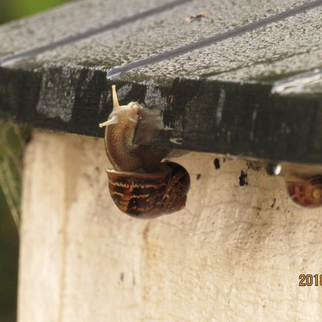 """SnailLife"" stock image"