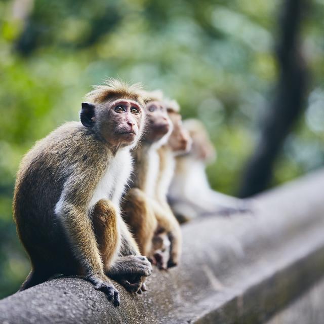 """Group of cute monkeys"" stock image"