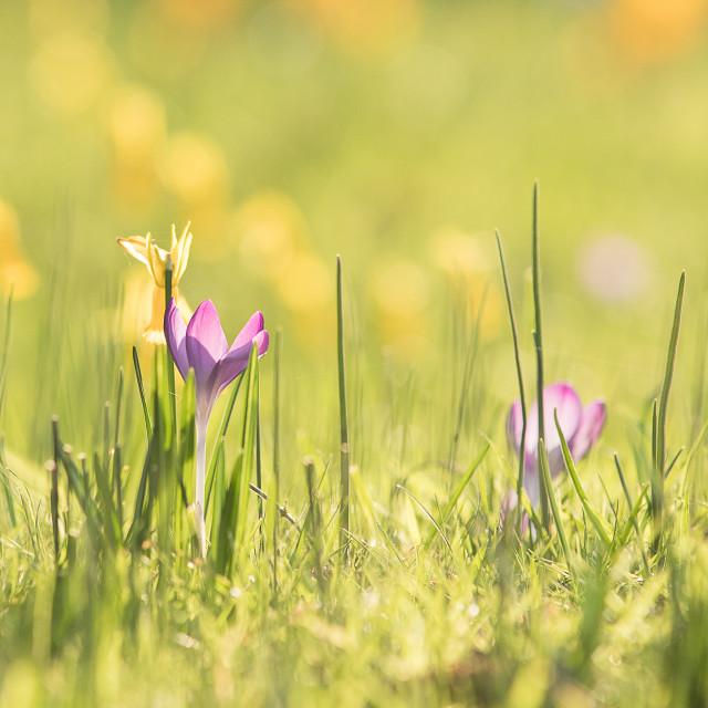 """Springtime Impression"" stock image"