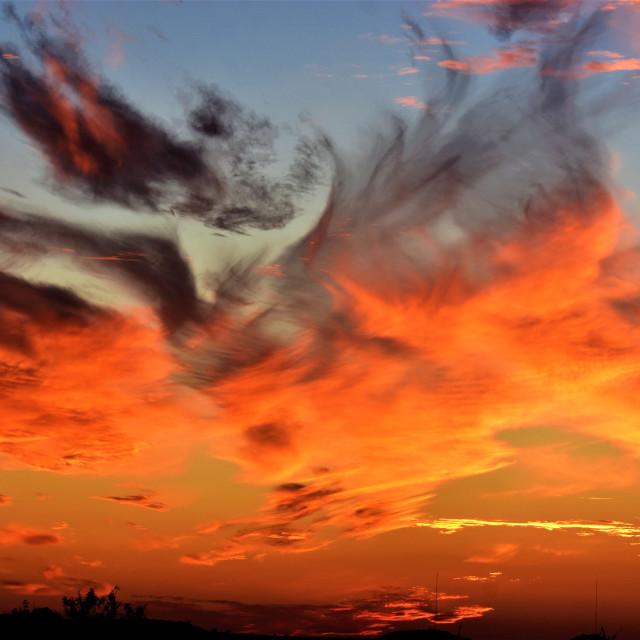 """Firebird series photo four"" stock image"