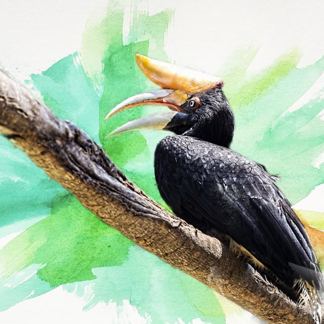 """""""Helmeted hornbill"""" stock image"""