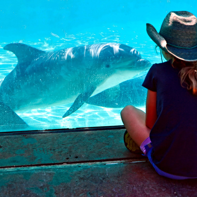 """""""Girl and dolphin"""" stock image"""