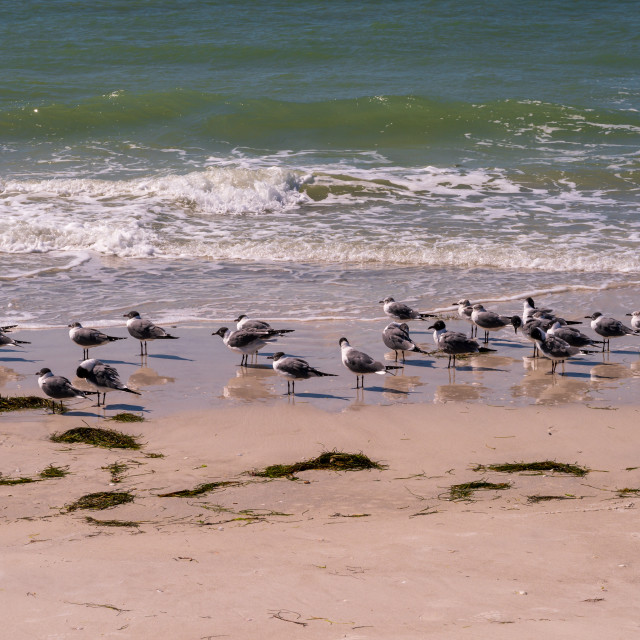 """Seagulls on the Beach"" stock image"