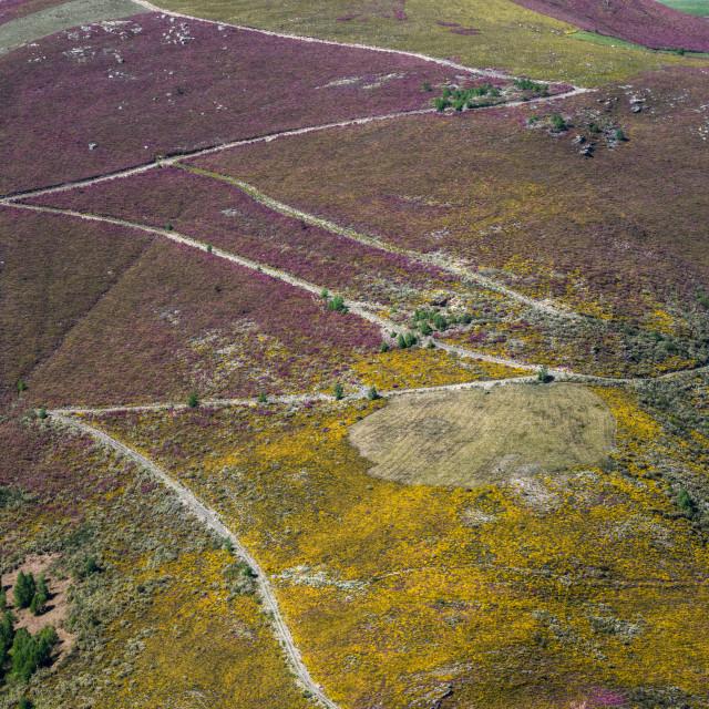 """""""Caminos rurales a través de montañas cubiertas de flores"""" stock image"""