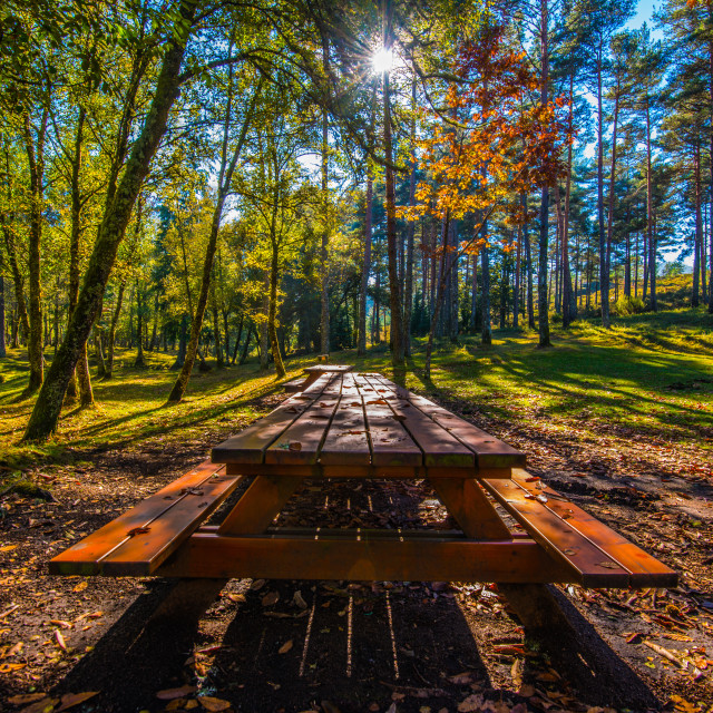 """""""Table between trees"""" stock image"""