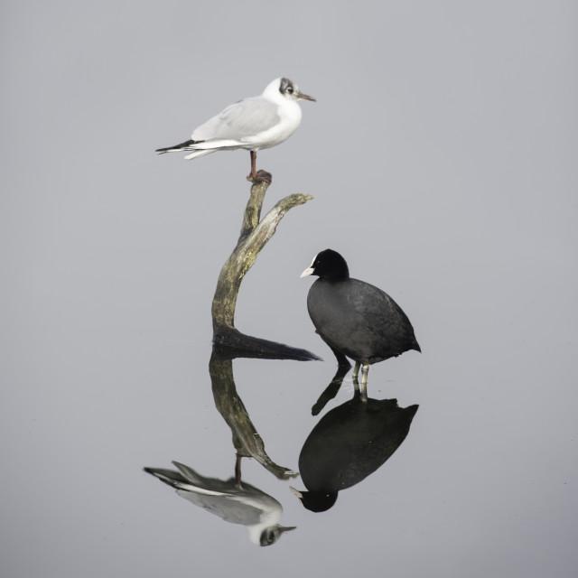 """Lake Reflections"" stock image"