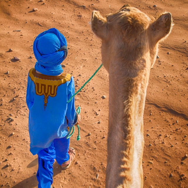 """Berber Leading a Camel"" stock image"