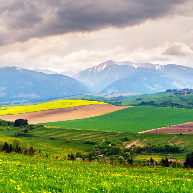 """""""Spring storm in mountains panorama. Dandelion meadow."""" stock image"""